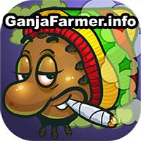 o marihuanie, marihuana, konopie indyjskie, cannabis, ganjafarmer, ganja farmer