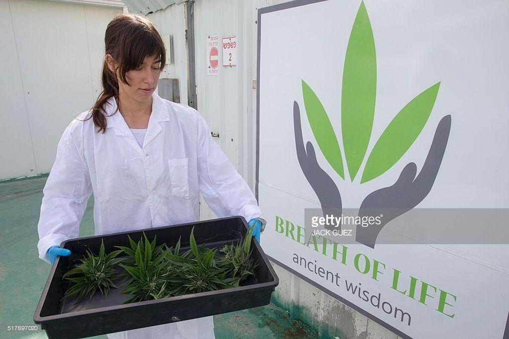 Terapia choroby Leśniowskiego i Crohna za pomocą medycznej marihuany, GanjaFarmer, Ganja Farmer