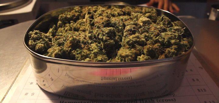 Jak wynika z badań, marihuana może dostarczyć ulgę podczas doświadczania migren, GanjaFarmer, Ganja Farmer