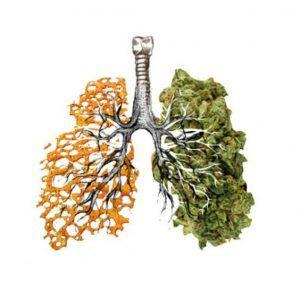 marihuana-pluca-tyton-1