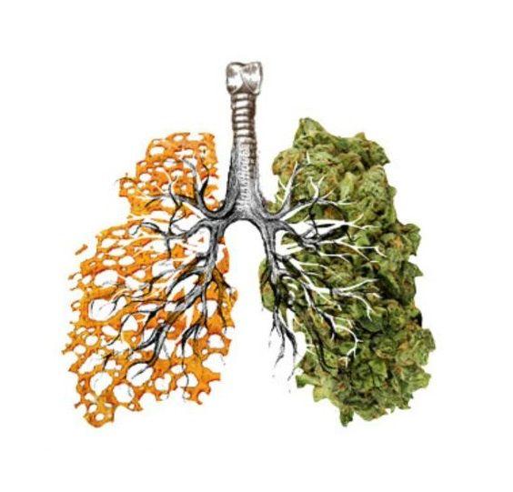 Marihuana jest mniej szkodliwa niż tytoń, GanjaFarmer, Ganja Farmer