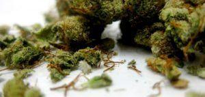 medyczna-marihuana-lekarz-medycyna-cbd-leczy-konopia-indyjska-szusz-z-medycznej-marihuany-cbd-89900