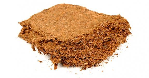 Korzyści z uprawy marihuany w włóknie kokosowym, GanjaFarmer, Ganja Farmer