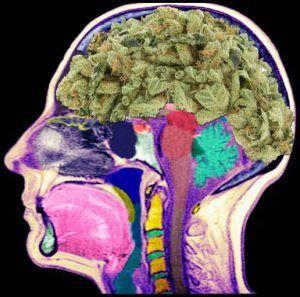 Cannabis sprzyja powstaniu schizofrenii, GanjaFarmer, Ganja Farmer