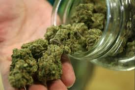 USA: Kolejne cztery Stany legalizują cannabis jako używkę, GanjaFarmer, Ganja Farmer