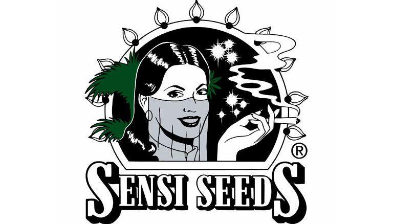 5 Odmian Nasion Marihuany od Firmy Sensi Seeds, GanjaFarmer, Ganja Farmer