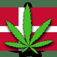 Dania: Rolnicy chcą produkować medyczną marihuanę, GanjaFarmer, Ganja Farmer