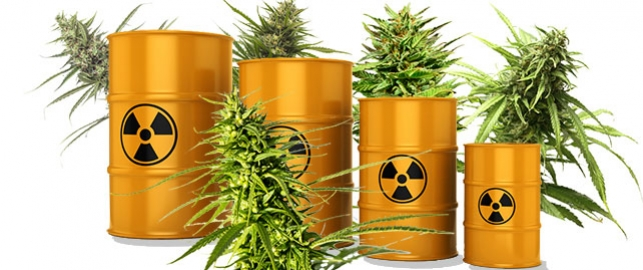Skandal w Kanadzie: Pestycydy w Medycznej Marihuanie, GanjaFarmer, Ganja Farmer