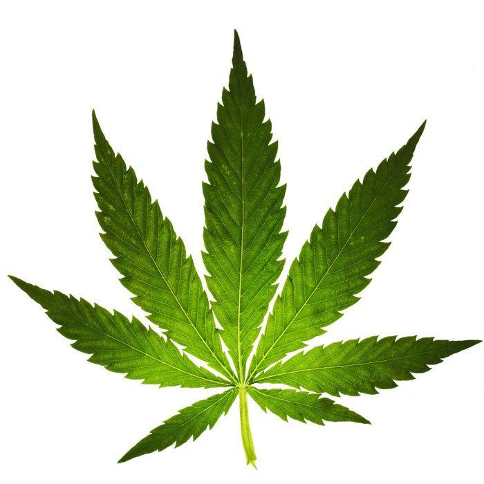 Eventy Cannabisowe, GanjaFarmer, Ganja Farmer