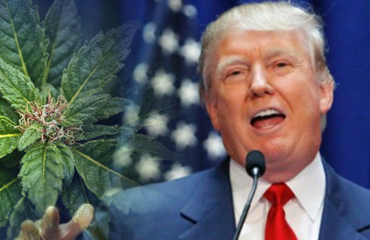 Porządni ludzie nie palą marihuany, czyli jak Donald Trump w ciągu 25 lat zmienił zdanie o marihuanie, GanjaFarmer, Ganja Farmer