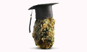 Stypendia cannabisowe w Colorado, GanjaFarmer, Ganja Farmer