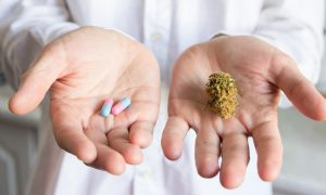 Niemcy: pierwsze liczby po legalizacji medycznej marihuany, GanjaFarmer, Ganja Farmer