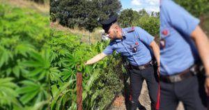 Myślała, że uprawa cannabisu jest już legalna, GanjaFarmer, Ganja Farmer