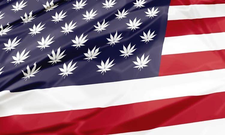 USA: trzy kolejne stany głosują za legalizacją, GanjaFarmer, Ganja Farmer