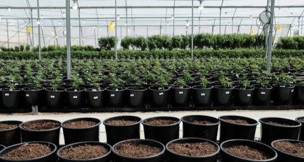 Niemcy: Do 2028 roku Rynek Medycznej Marihuany Będzie Wart 8 Miliardów Euro, GanjaFarmer, Ganja Farmer