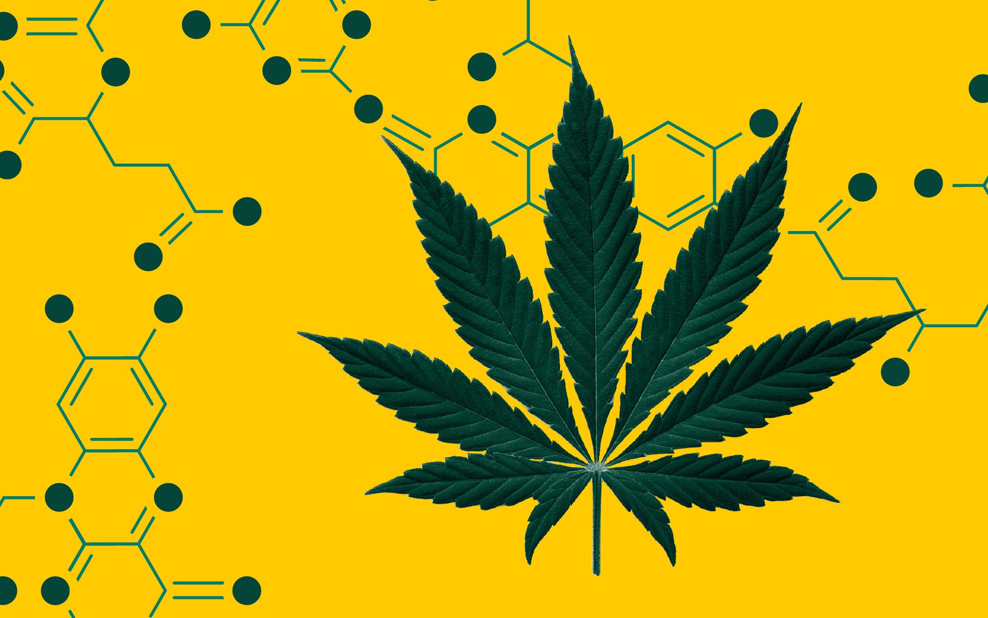 Naukowcy Zidentyfikowali Nowy Cannabinoid: THCP, GanjaFarmer, Ganja Farmer