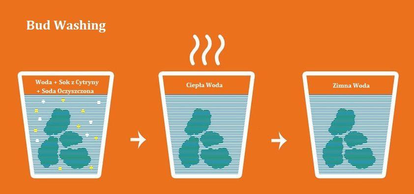 Co Daje Tak Zwany Bud Washing i Water Curing?, GanjaFarmer, Ganja Farmer
